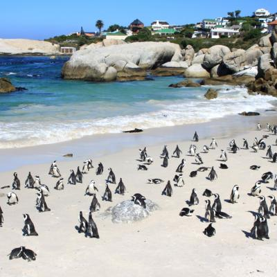 South Africa cape town peninsula penguins beach